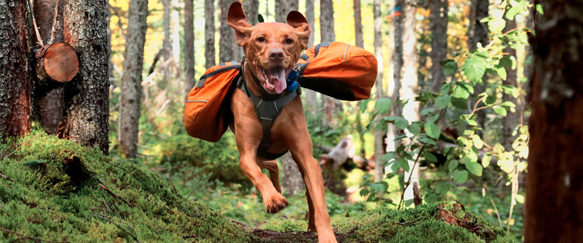 Dog running in forest wearing dog pack